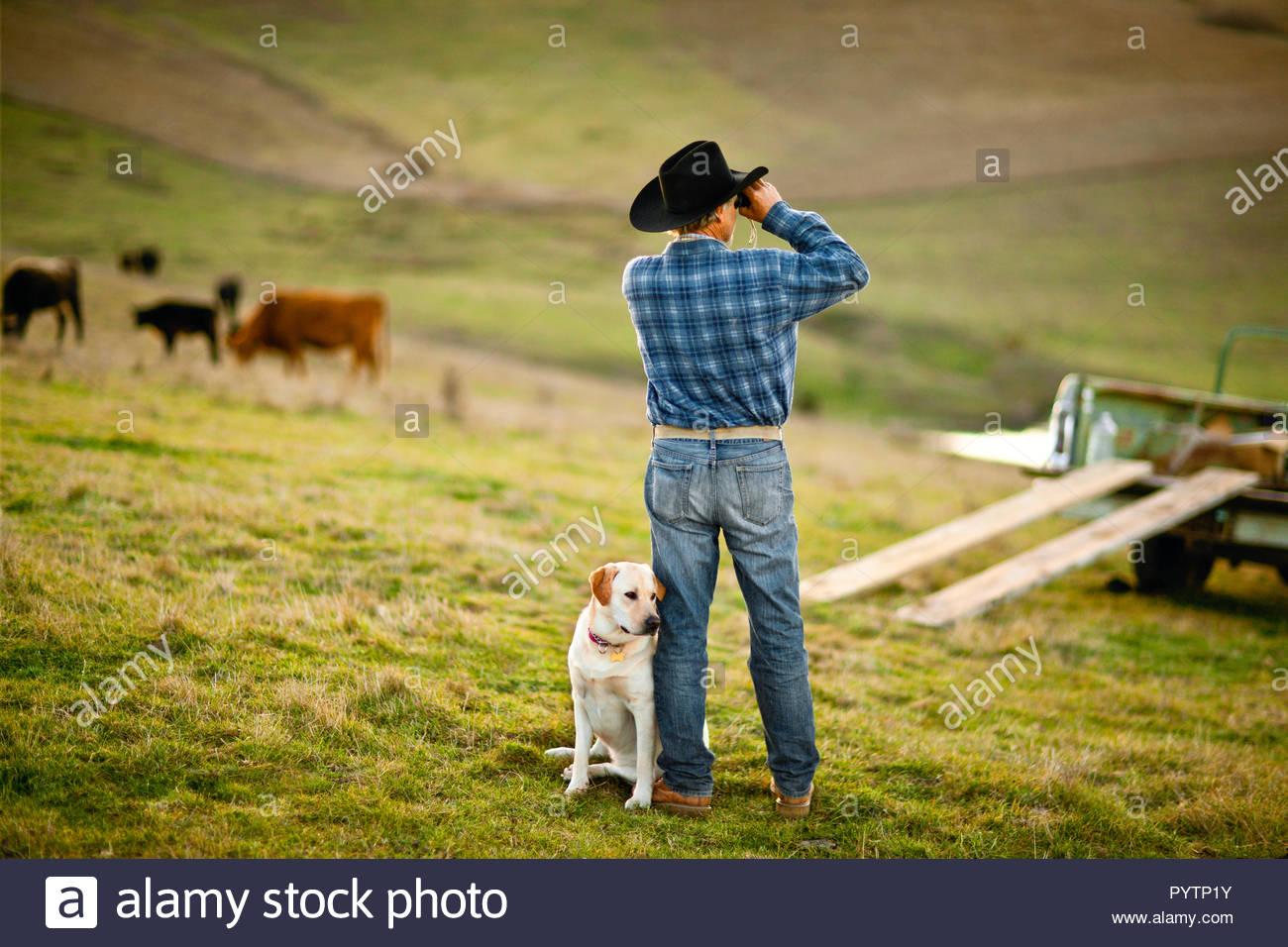Bauer suchen durch ein fernglas auf einem paddock mit seinem hund
