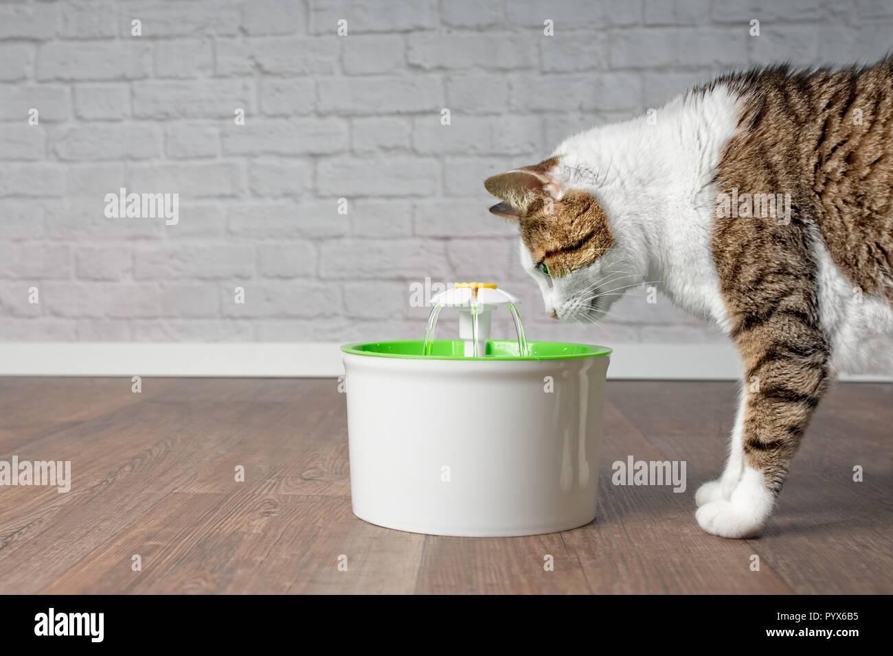 Durstig tabby Katze schauen neugierig auf ein Haustier Trinkbrunnen. Seitenansicht mit kopieren. Stockbild