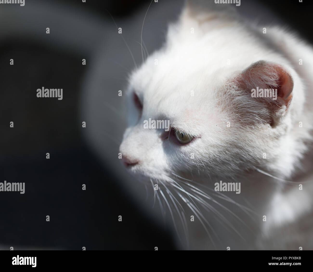 Hungrige Katze in einem Restaurant sitzen und um das Suchen Stockbild