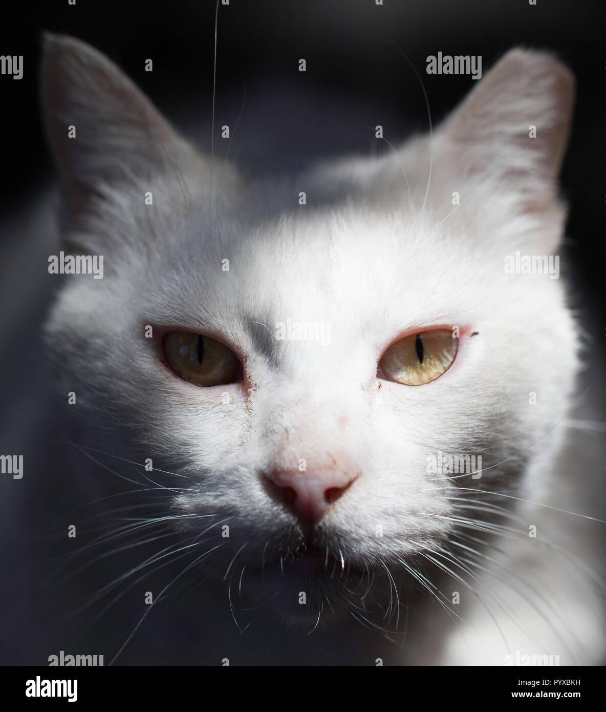 Hungrige Katze starrt mich Essen Stockbild