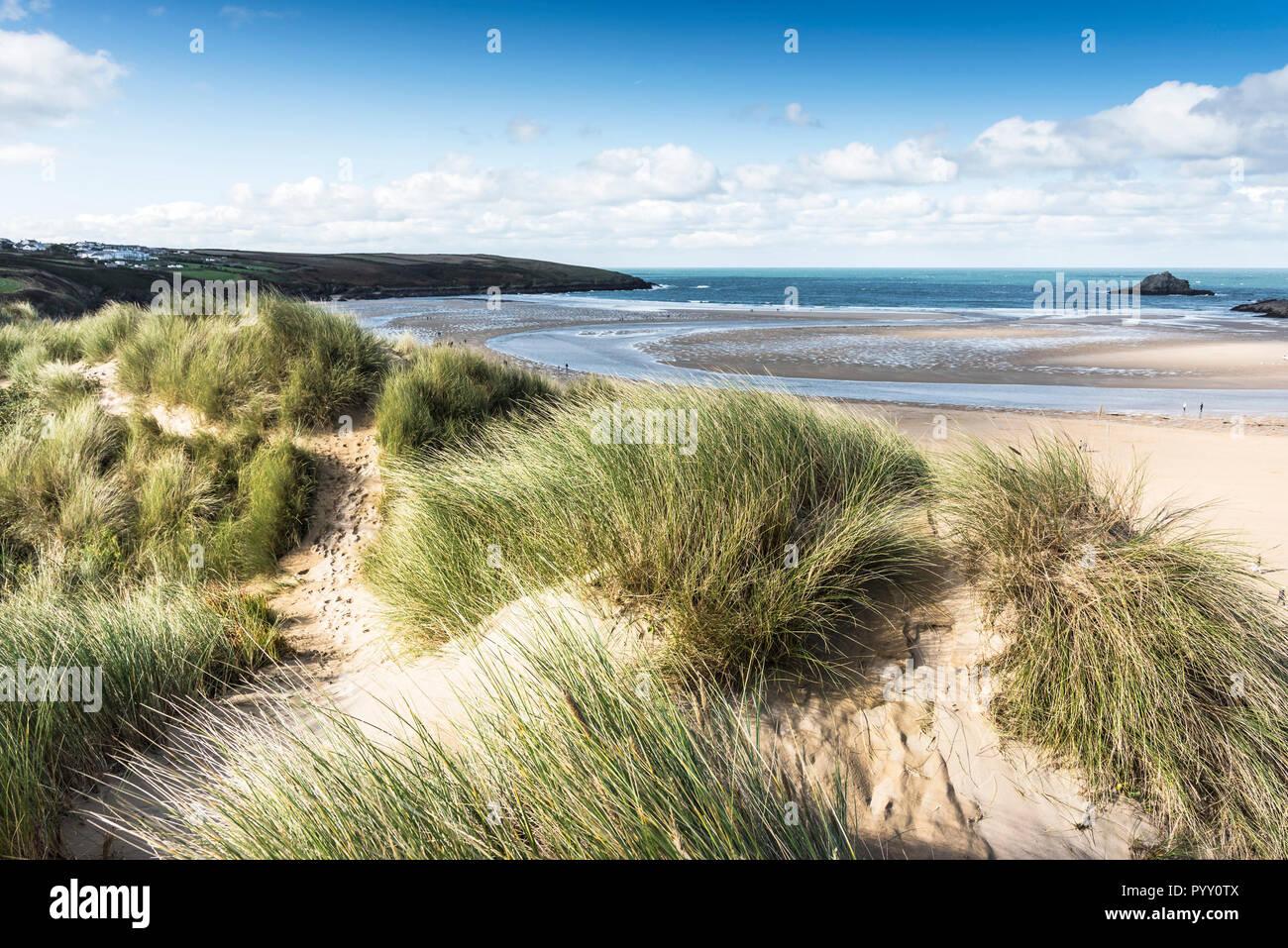 Ammophila marram Gras wachsen auf dem Sand dune-System mit Blick auf Crantock Beach in Newquay in Cornwall. Stockbild
