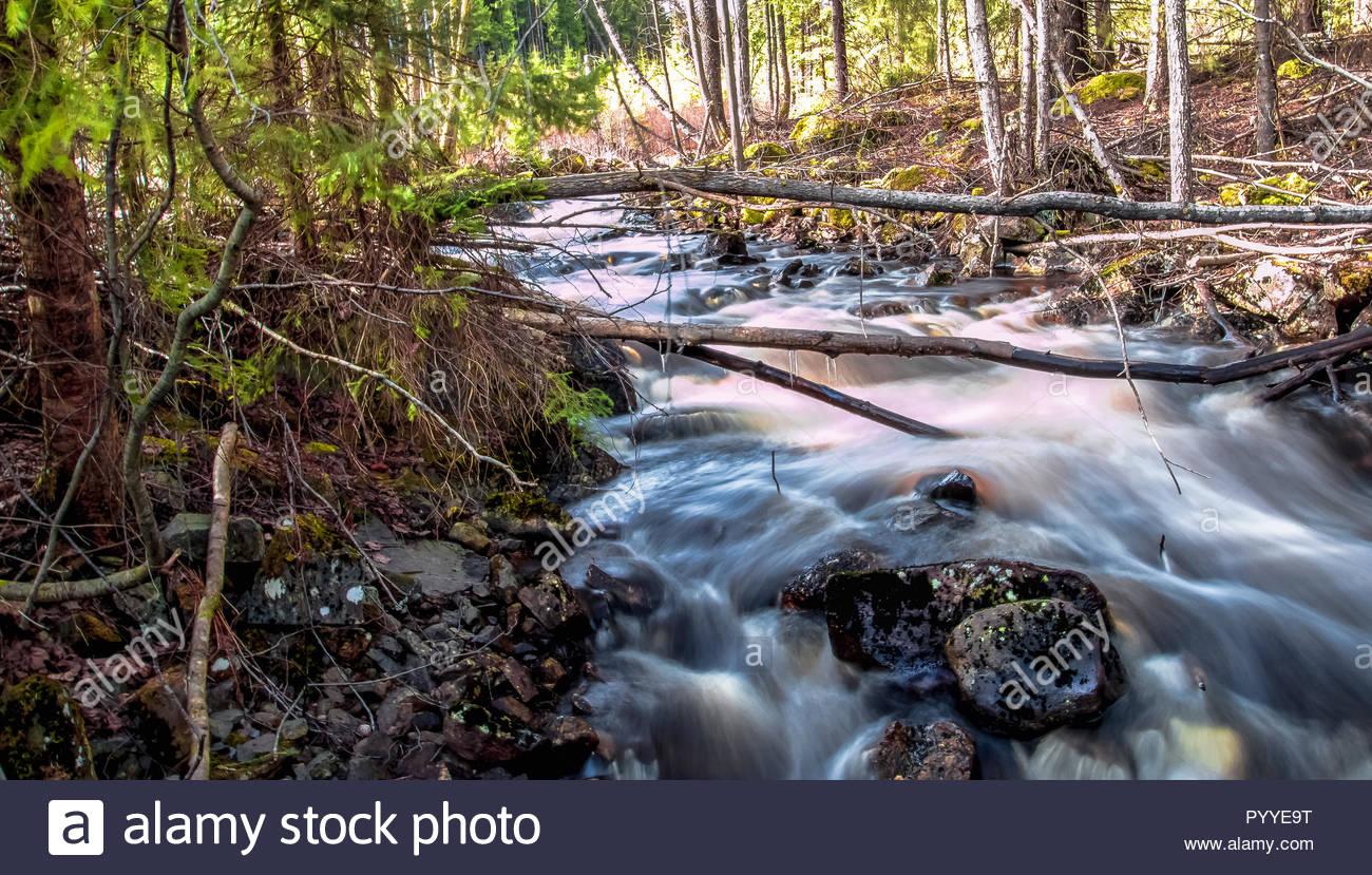 Kleine Fluss schwebt durch einen Wald irgendwo in Schweden Stockbild