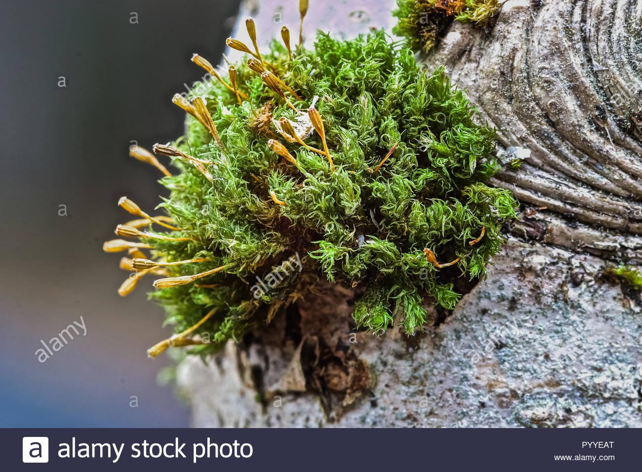 Moos auf einem Baum gewachsen Stockbild