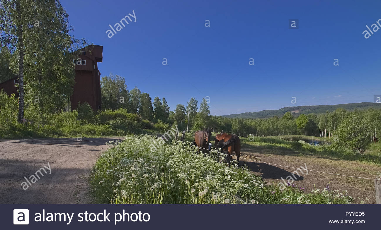 Landschaft in Schweden im Sommer Stockbild