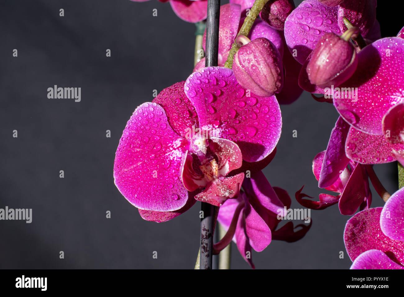 Wasserperlen Für Orchideen Orchidee In Wasserperlen 2019 01 10