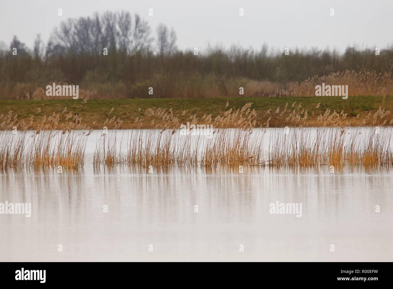 Sumpfland in Holland große Teich mit Unkraut und Baum in der Natur Park Stockbild