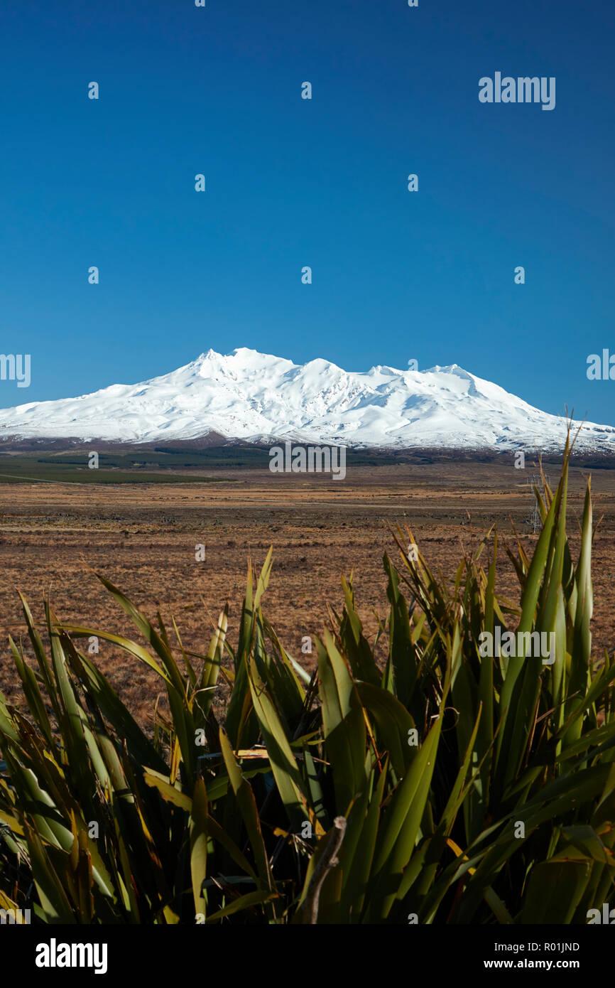 Mt Ruapehu, Rangipo Wüste, und Flachs, Tongariro National Park, Central Plateau, North Island, Neuseeland Stockfoto