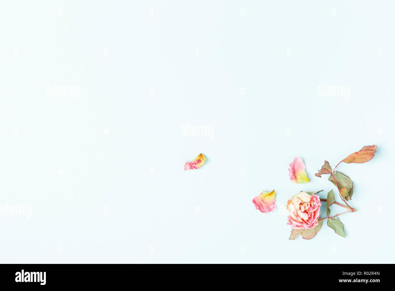 Blumen Komposition. Rahmen aus getrockneten rosa Blüten auf blauem Hintergrund. Flach, Ansicht von oben, kopieren Raum Stockfoto
