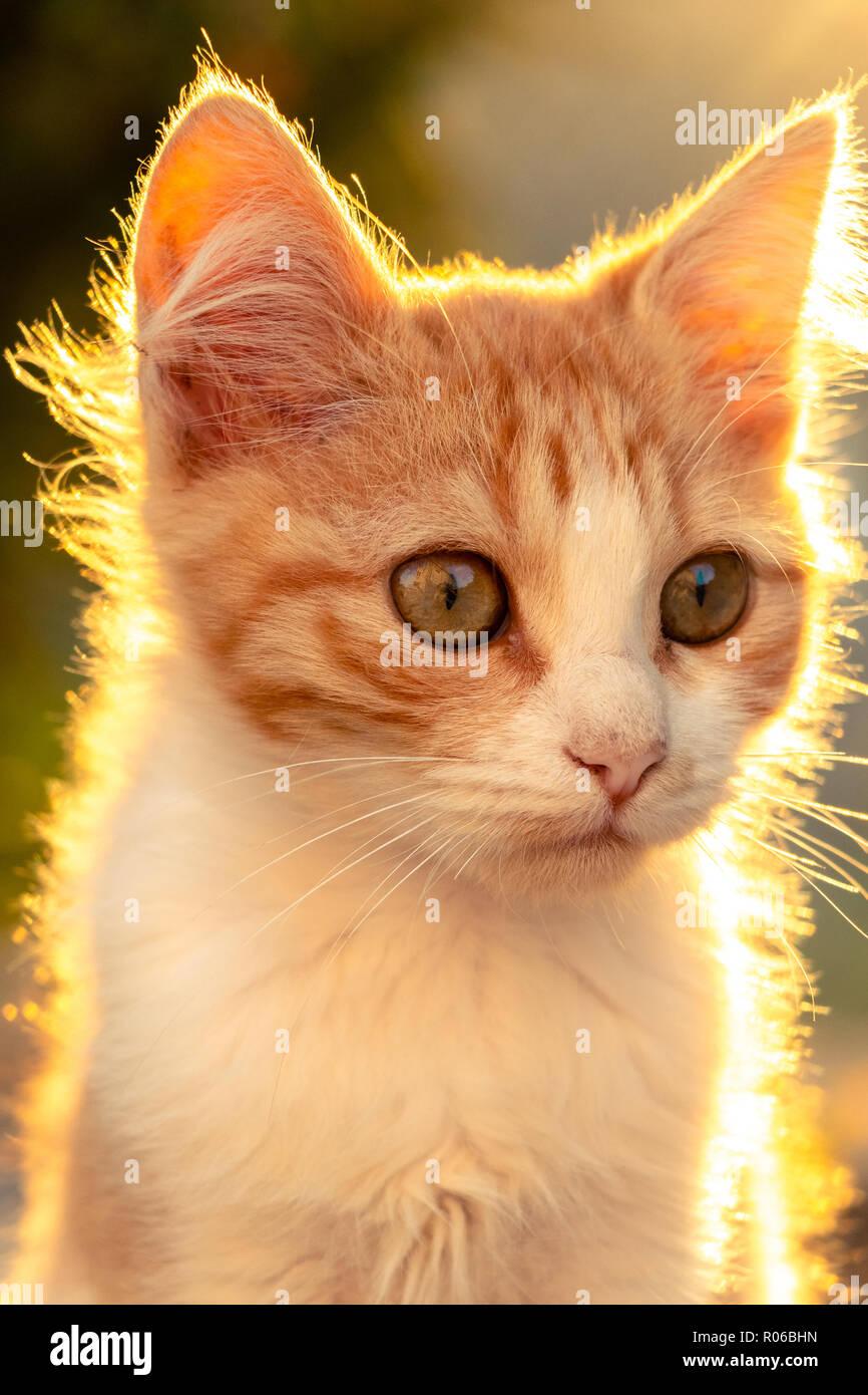 Katze Portrait bei Sonnenuntergang Stockbild