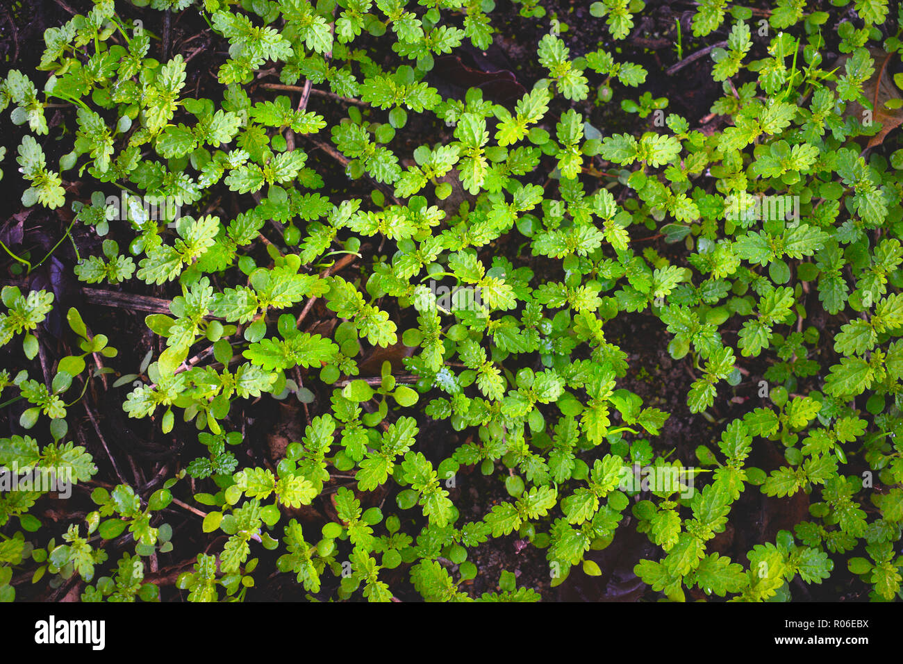 Frisches Gras Im Herbst Wandteppich Der Grunen Nesseln Auf Eine