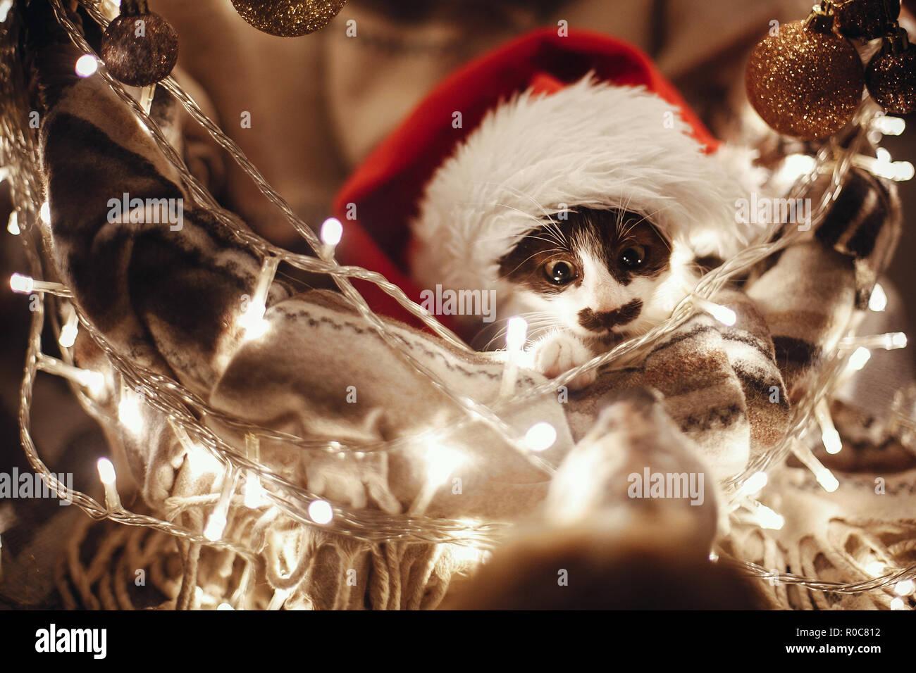 Cute Kitty in Santa hat im Korb sitzen mit Lichtern und Ornamente unter Weihnachtsbaum in festlichem Zimmer, an Hund Freund suchen. Frohe Weihnachten conce Stockbild
