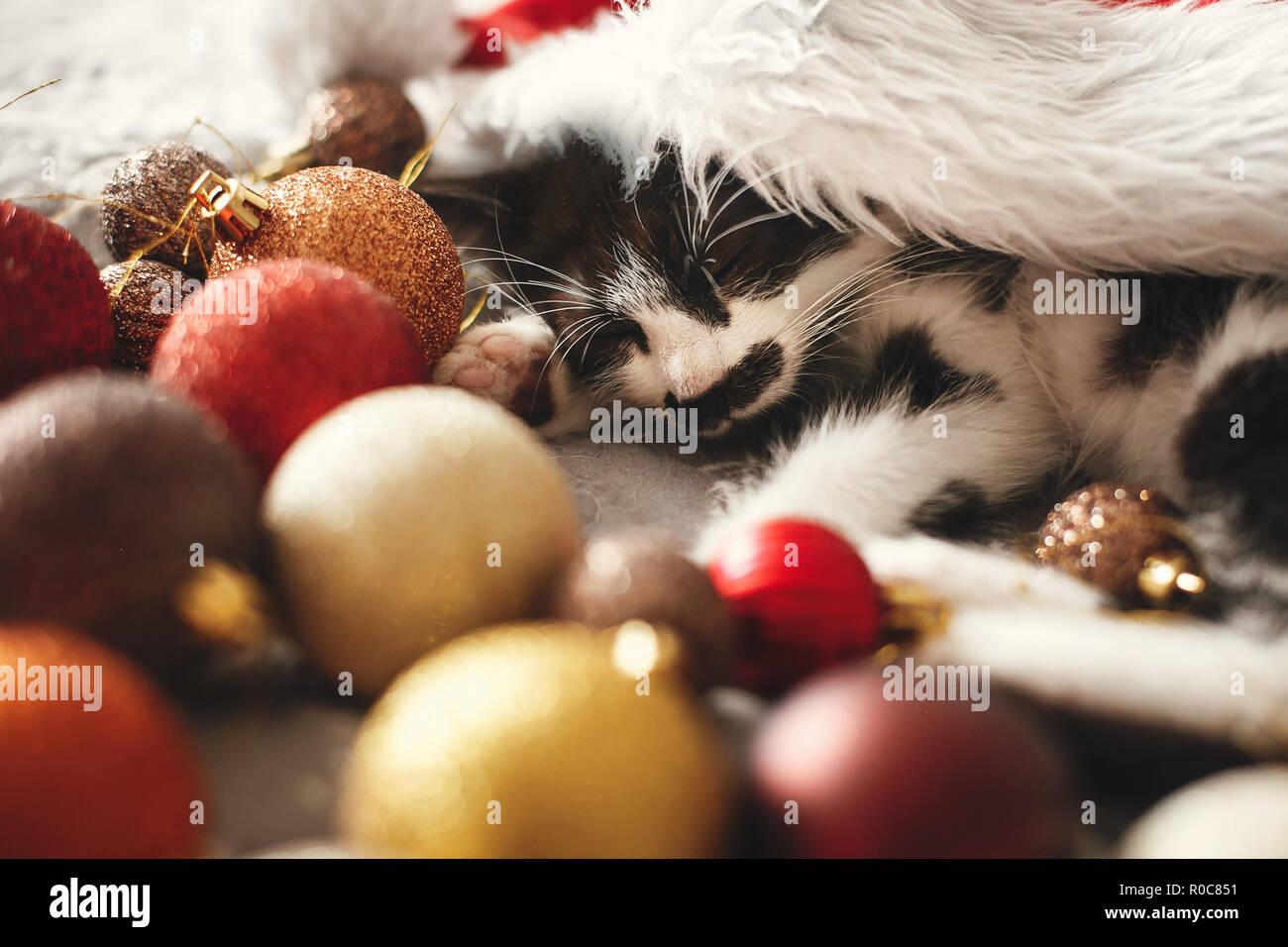 Cute Kitty schlafen in Santa Hut auf dem Bett mit Gold und Rot Christbaumkugeln in festlichen Raum. Frohe Weihnachten Konzept. Adorable Kätzchen Nickerchen. Atmosph Stockbild