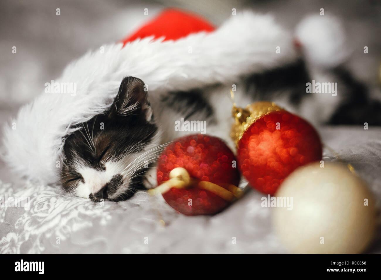 Cute Kitty schlafen in Santa Hut auf dem Bett mit Gold und Rot Weihnachtsverzierungen in festlichen Raum. Frohe Weihnachten Konzept. Adorable lustige Kätzchen Nickerchen. Stockbild