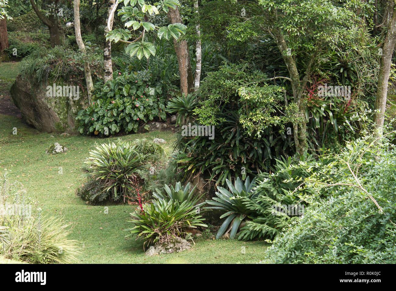Gartenblick mit Dämmen, Pflanzen, Felsen und Bäume Stockbild