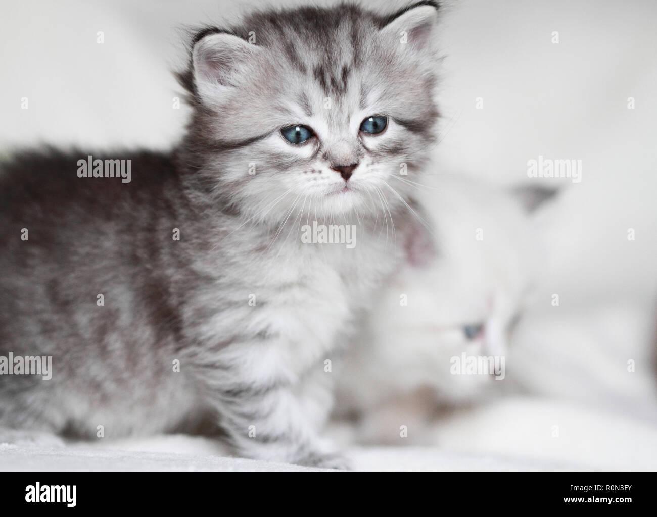 Adorable Welpen Katze auf dem Schnee Stockfoto