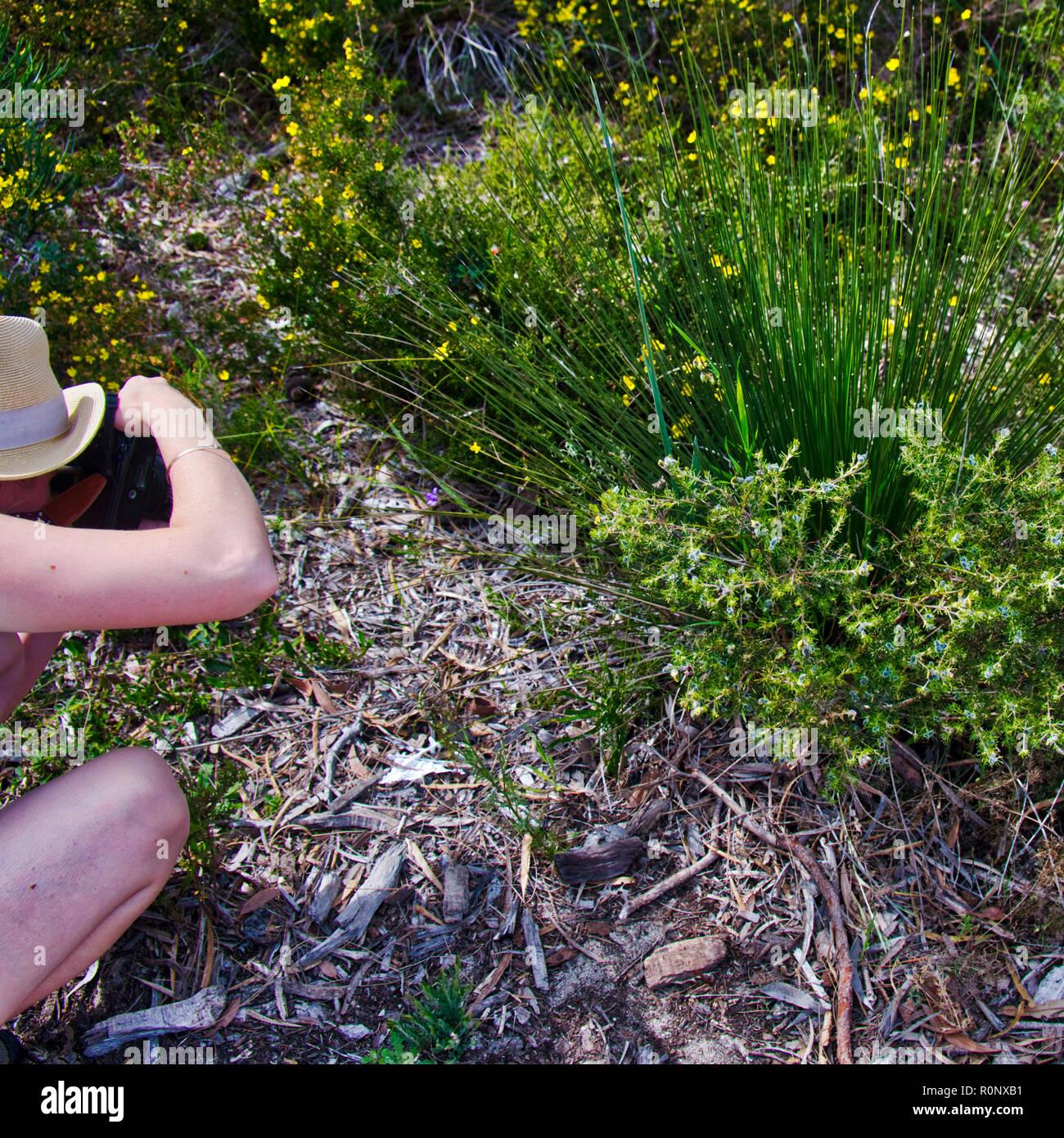 Fotograf nutzt SLR Kamera in vertikaler Modus einheimische Pflanzen zu fotografieren. Stockbild