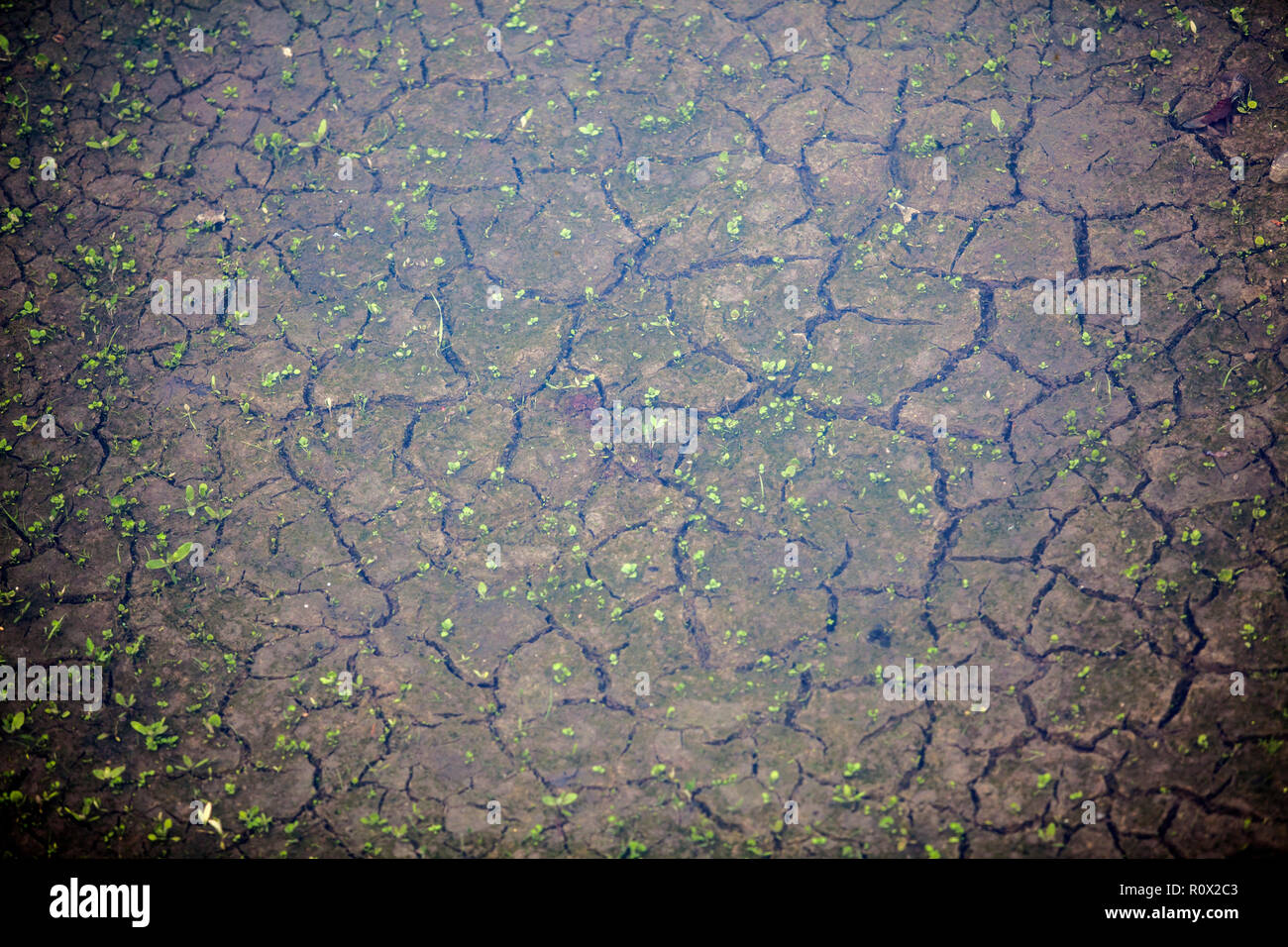 Dürre Riverbed, Bad Karlshafen, obere Wesertal, Weserbergland, Nordrhein-Westfalen, Hessen, Deutschland, Europa Stockbild
