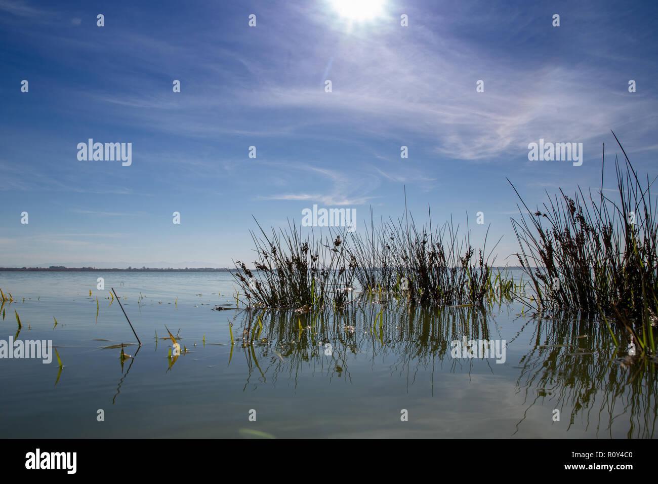 Eine ruhige und friedliche Landschaft Szene am Rande eines Sees an einem Frühlingstag Stockbild
