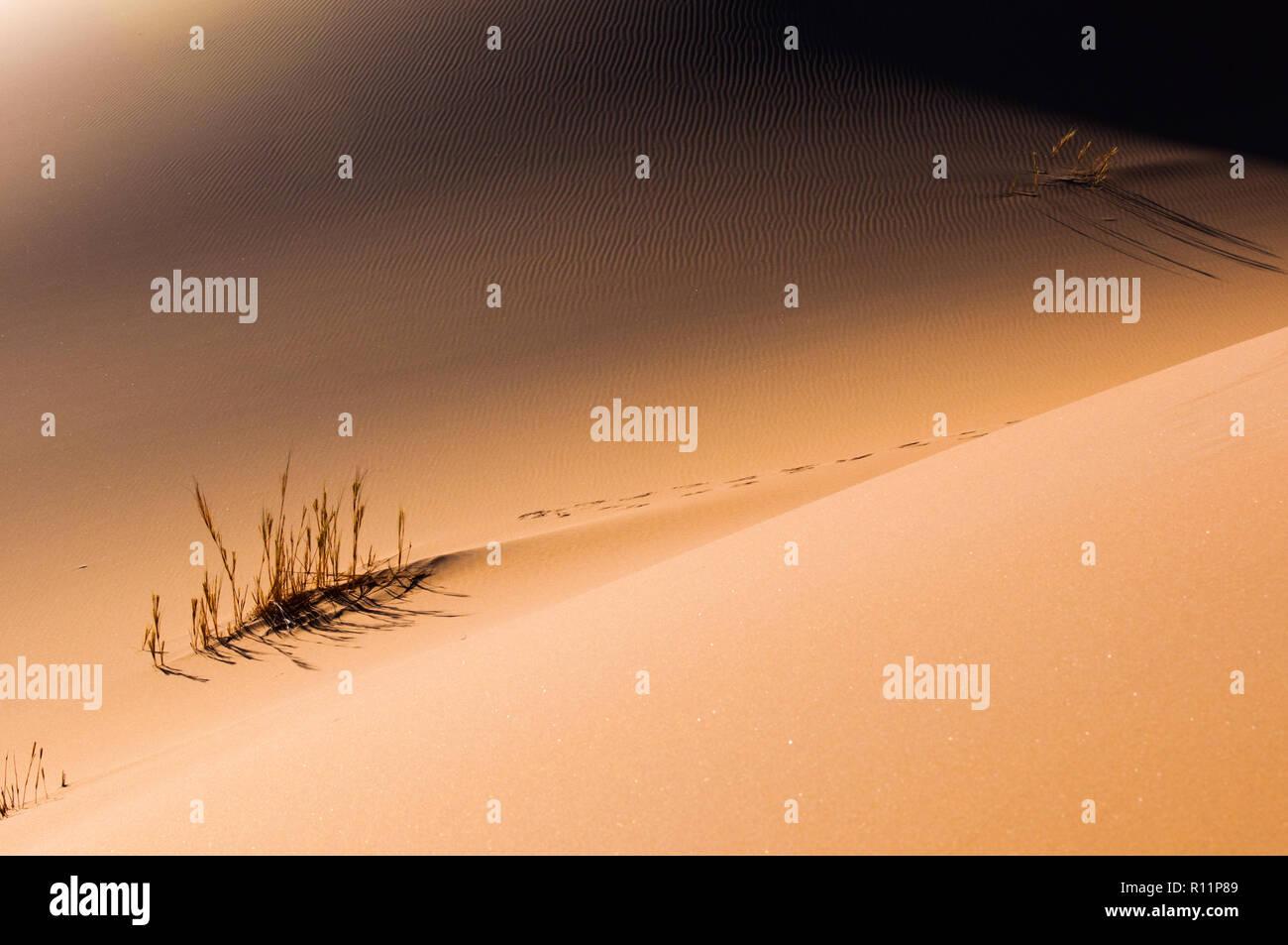 Shadow Dune Stockbild