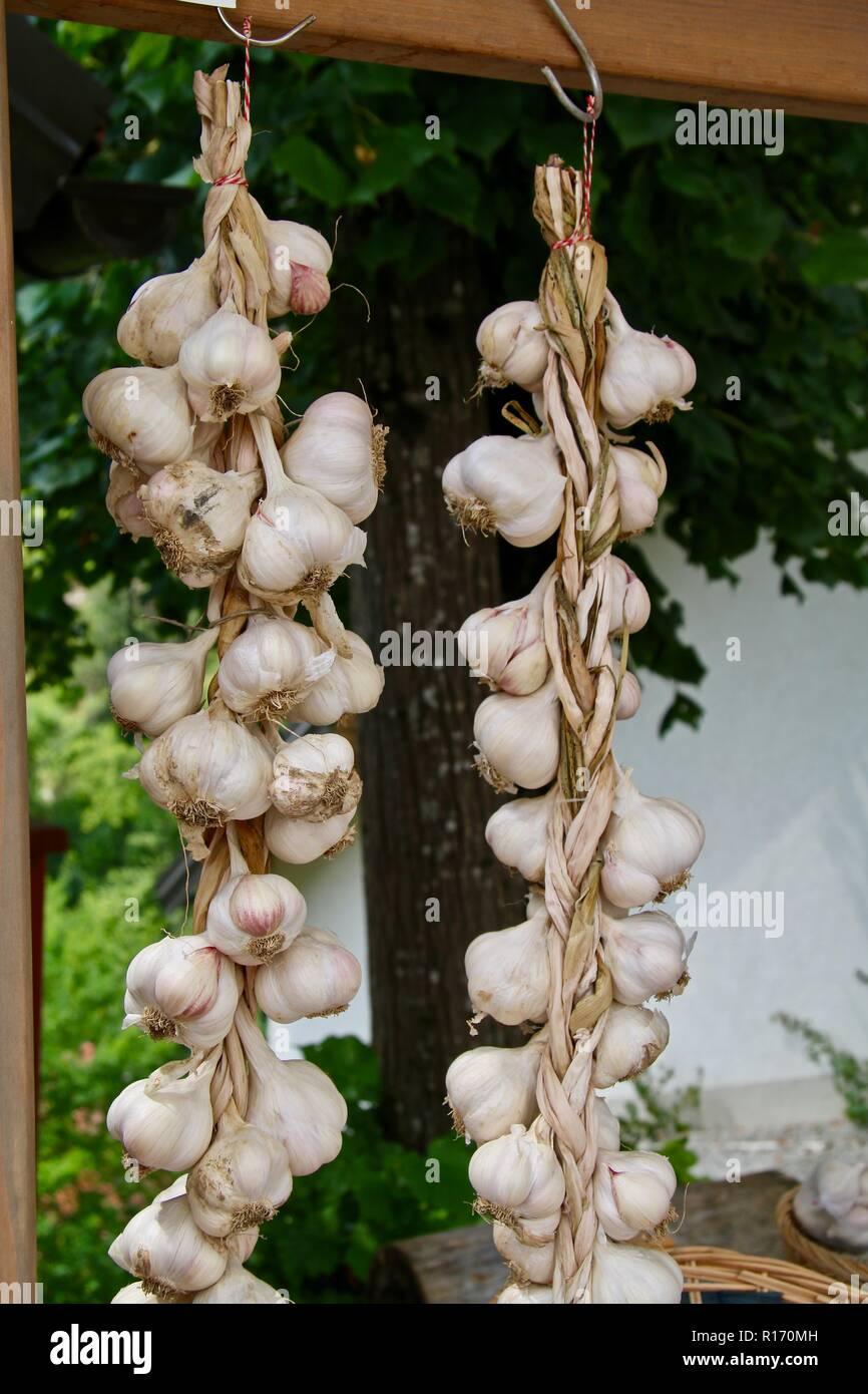 Lange Stränge von geflochtenen Knoblauch verkauft abzuwehren, das Böse in Europa, oder zum Kochen Stockbild