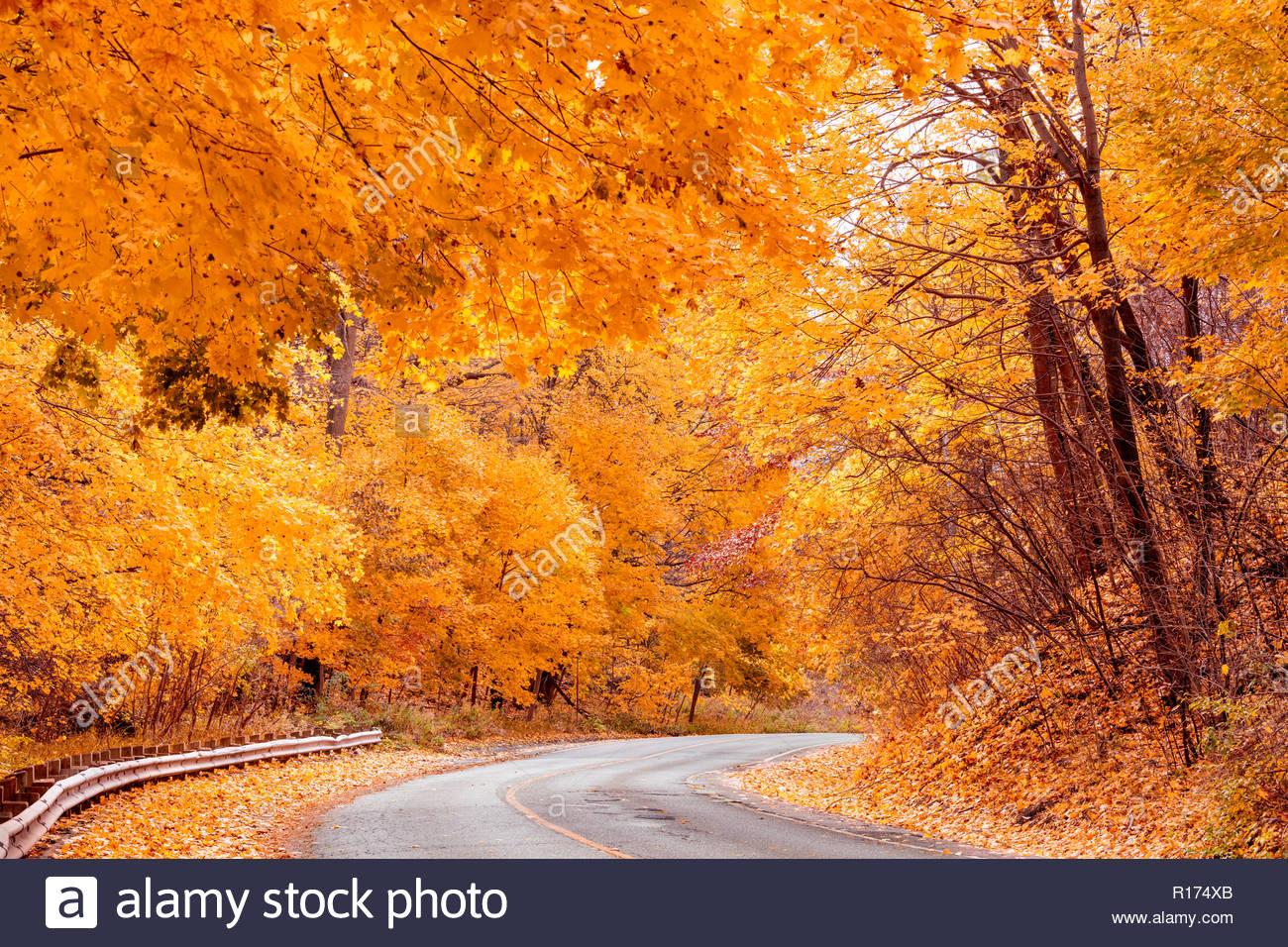 Peak Herbst Farbe Strasse Durch Den Ostlichen Laubwaldern Carolinian
