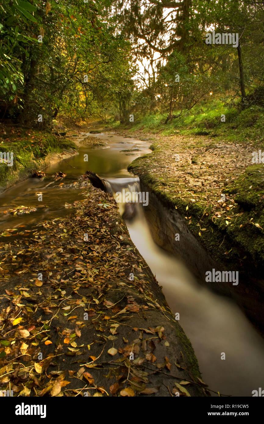 Hamsterley Forest Wasserfall Stockbild