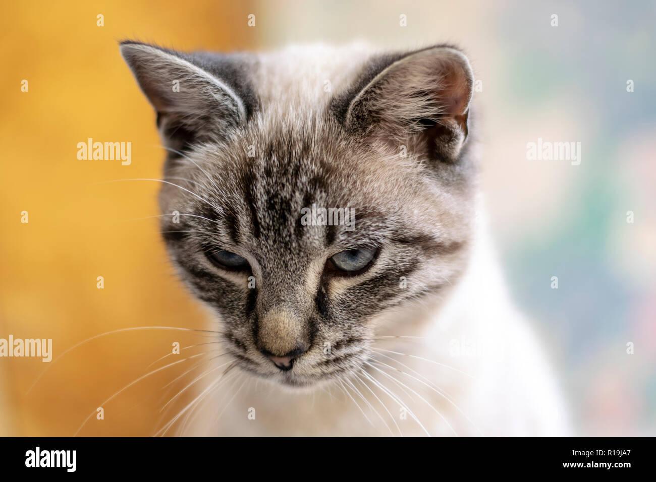 Junge, süße Katze Nahaufnahme Porträt Foto mit bokeh Hintergrund. Stockbild
