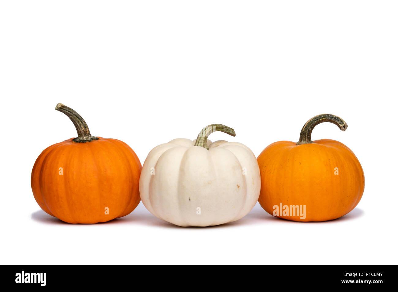Drei Mini Kürbisse Ein Weißer Kürbis Zwischen Zwei Orange Kürbisse