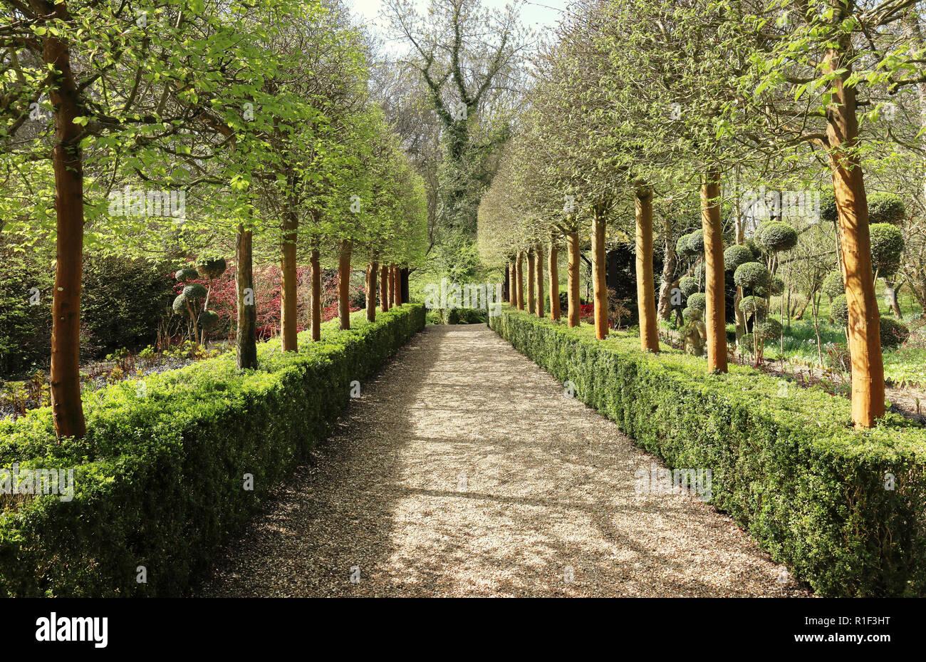 Weg durch die Allee der Bäume in einem Englischen Garten im Frühjahr Stockbild