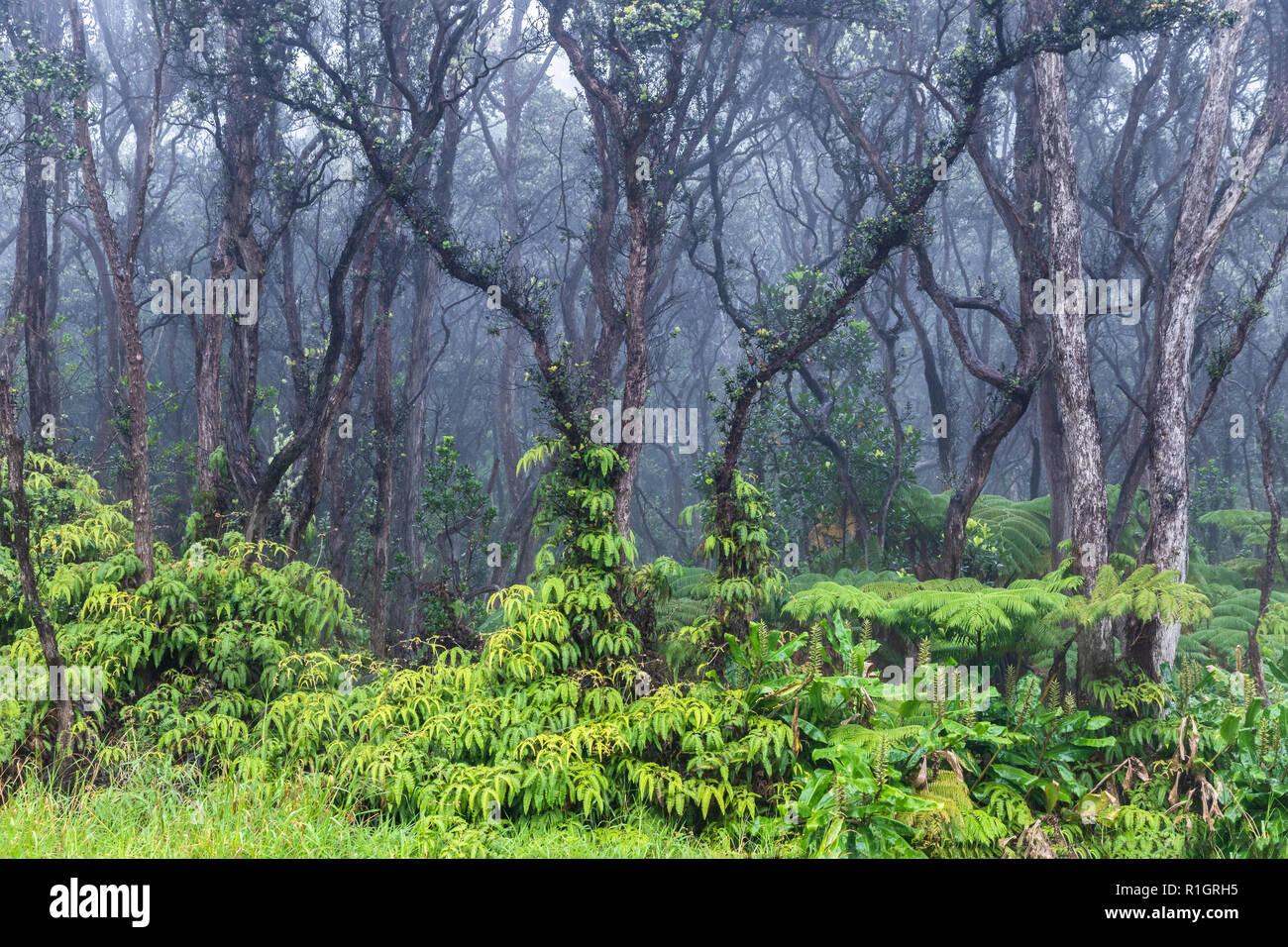 Tropischen Regenwald Auf Hawaiis Big Island Uppig Grune Vegetation