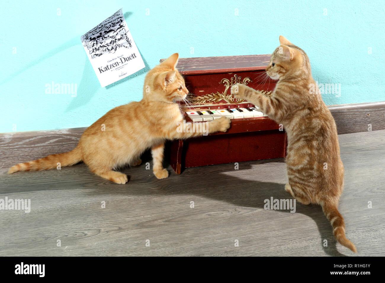 Zwei Kätzchen spielen mit einem Mini piano Stockfoto