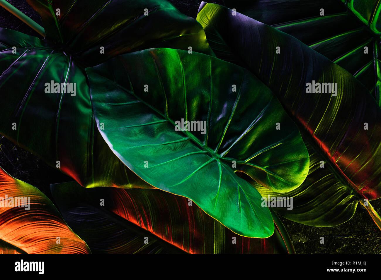 Full Frame Bild Der Schonen Palmen Blatter Mit Roten Und Grunen