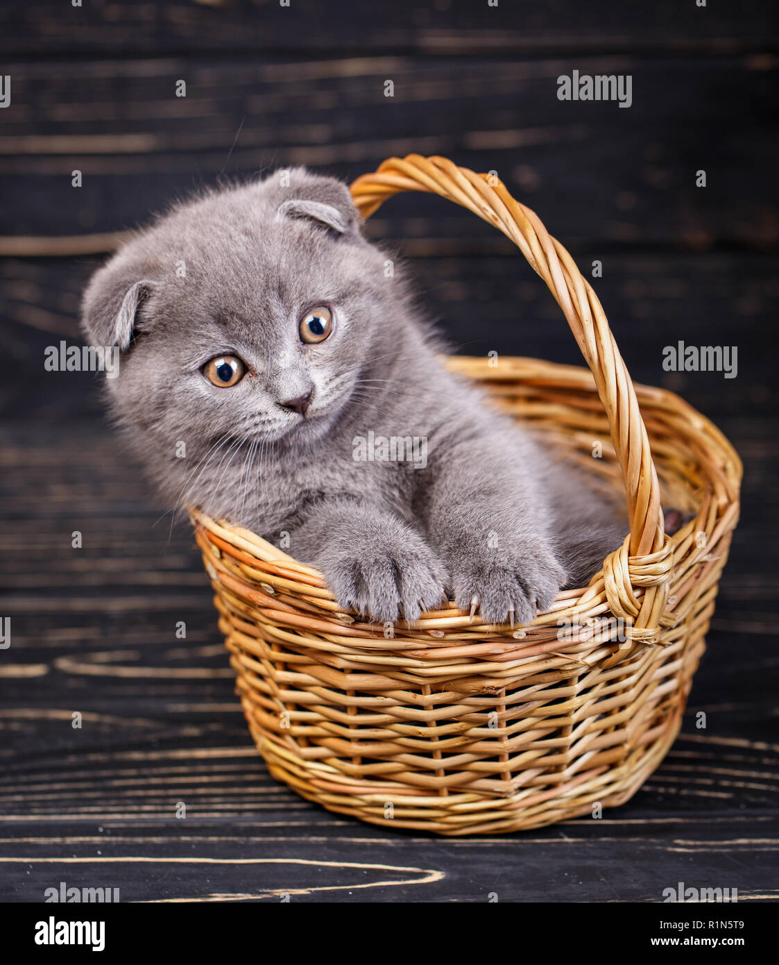 Ein Kätzchen einen Pfoten am Rande der Korb Stockfoto