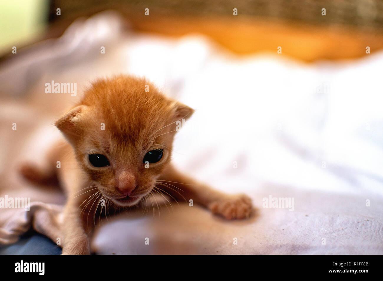 baby katzen bilder kostenlos