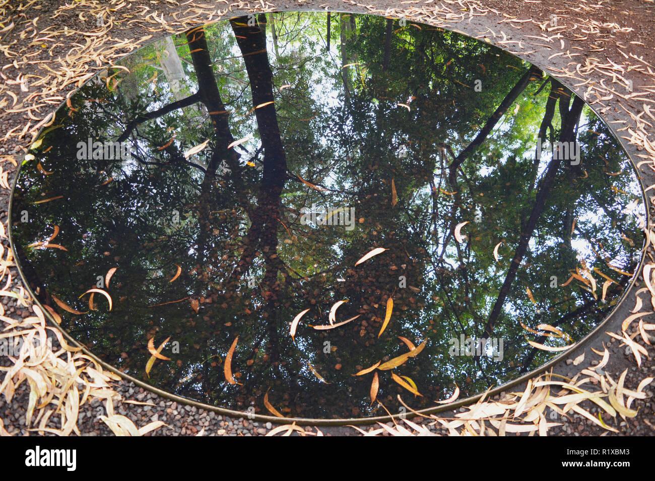 Eine alternative Perspektive des Lebens, einer schönen natürlichen Spiegel unserer Umgebung. Stockbild