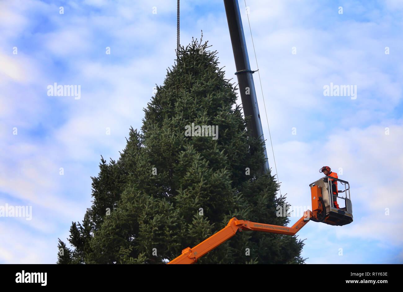 Durchmesser Weihnachtsbaum.Rostock Deutschland 15 Nov 2018 Die Traditionelle Weihnachtsbaum