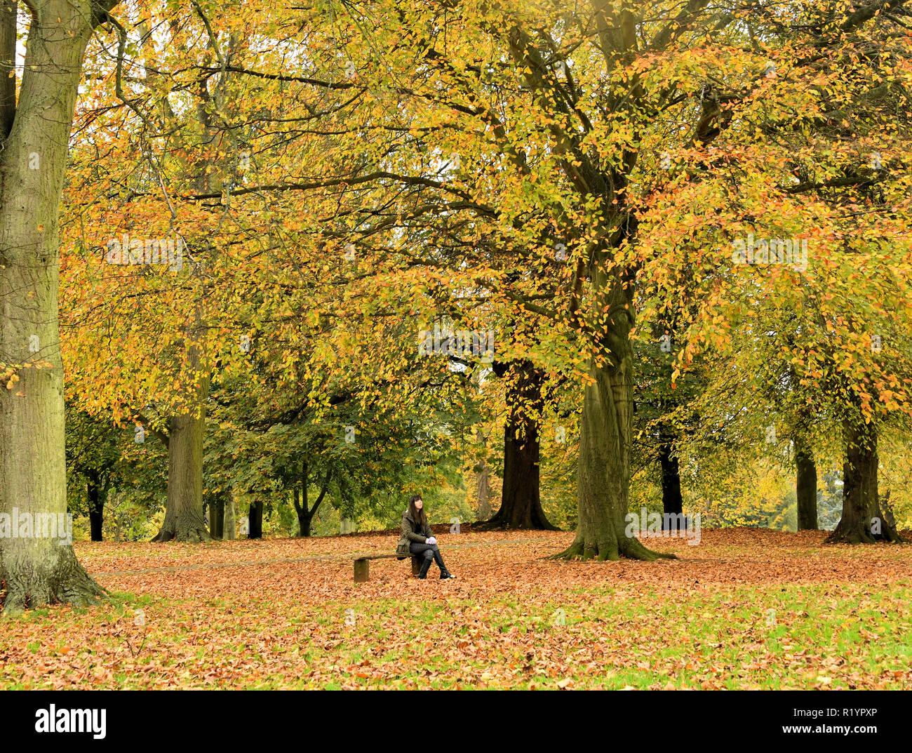 Herbst Wunder Stockbild