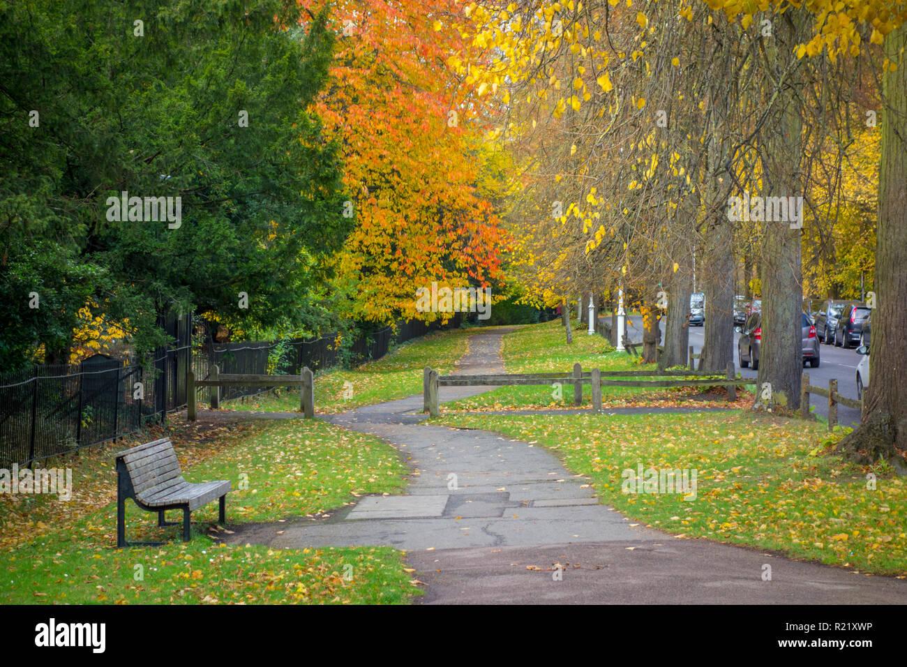 Rote und gelbe Blätter im Herbst auf Bäume über einen Fußgänger Fußweg auf dem Rücken in Cambridge, Großbritannien Stockbild