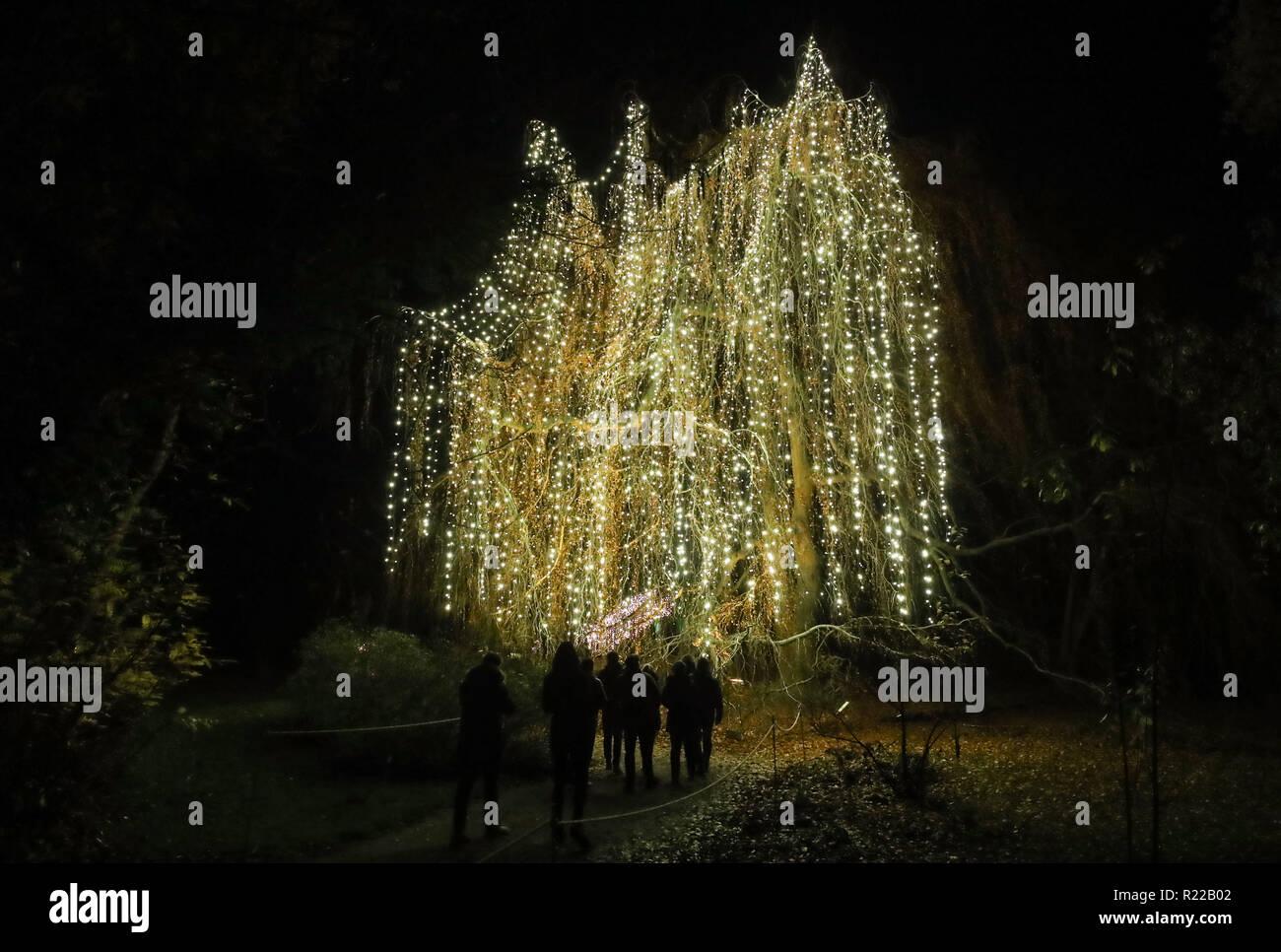 Weihnachten 2019 Berlin.Berlin 07 11 15 6 Januar 2019 Besucher Blick Auf Baum Mit Licht