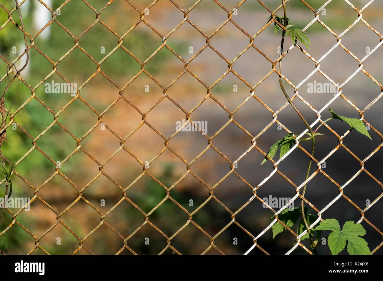 Hintergrund mit gemeinsamen hop und Kette - Zaun Stockfoto ...