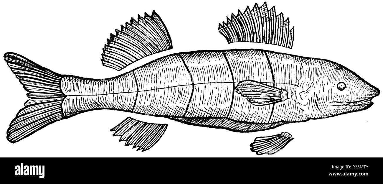 uk datieren Website Fisch Beste Online-Dating-Seite für über 50 uk