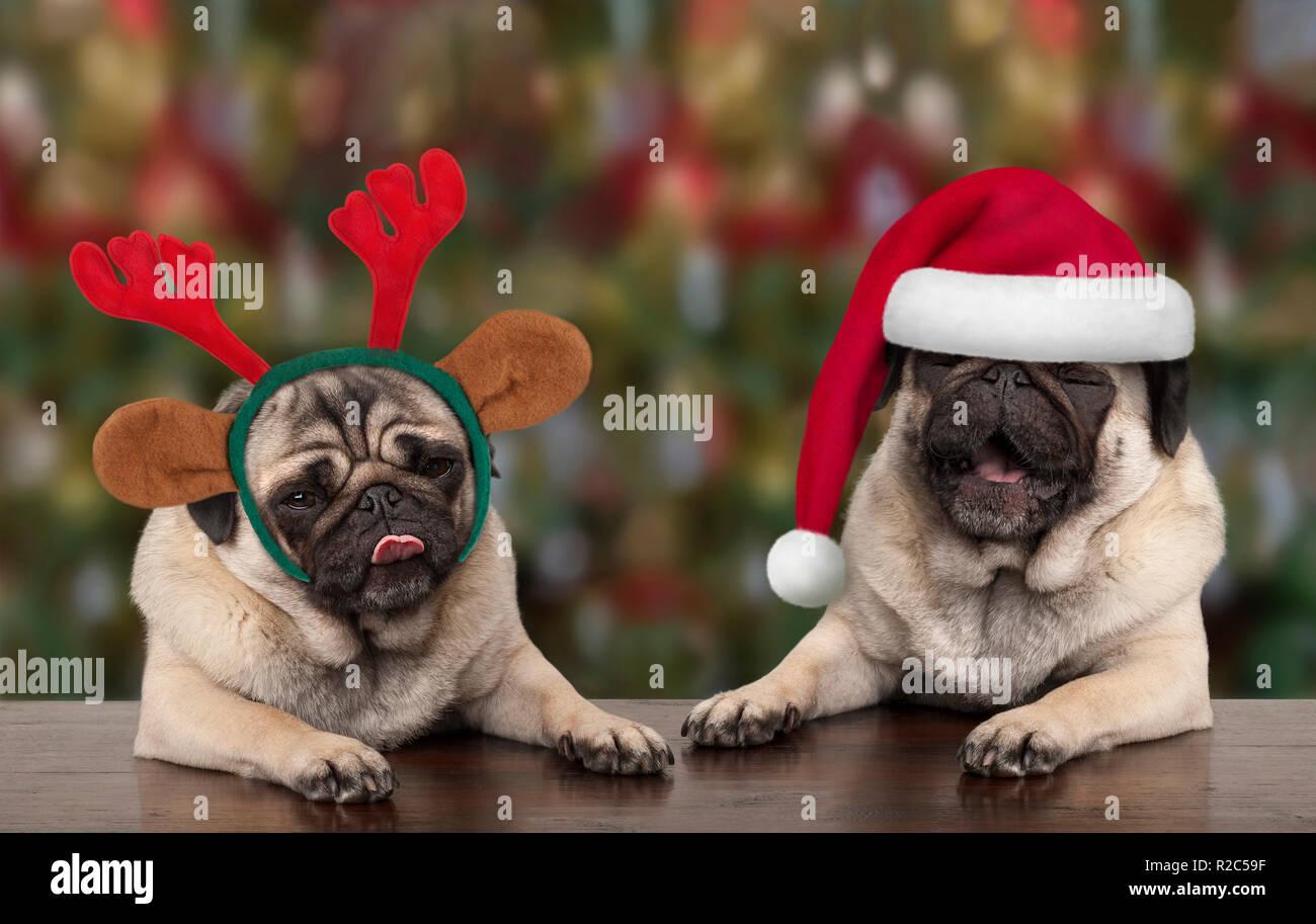 Mops Bilder Weihnachten.Lustige Süße Weihnachten Mops Welpen Hunde Lehnte Sich Auf Holztisch