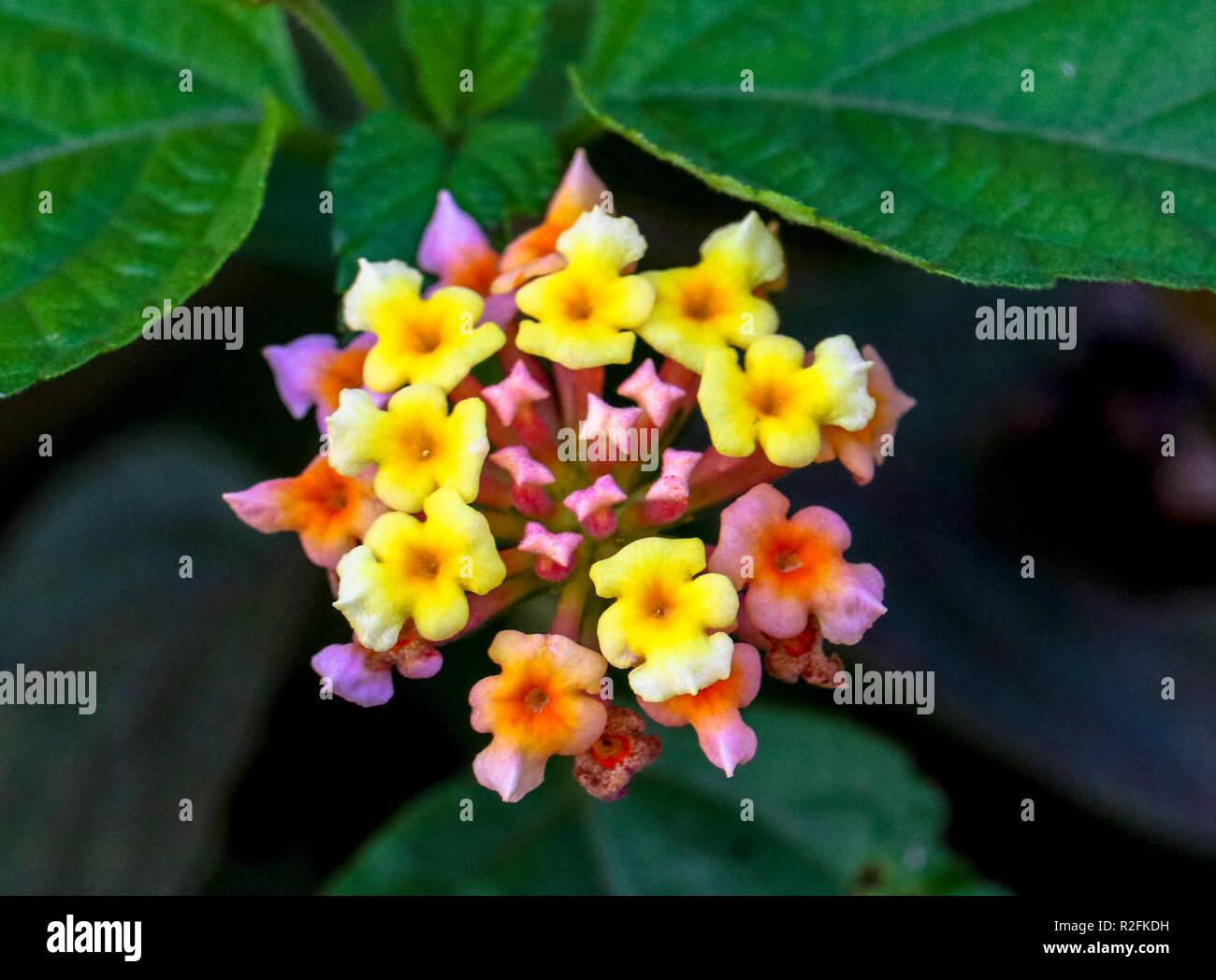 Blumen für Grußkarte. Natürlich gewachsenen Blumen im Garten Stockbild