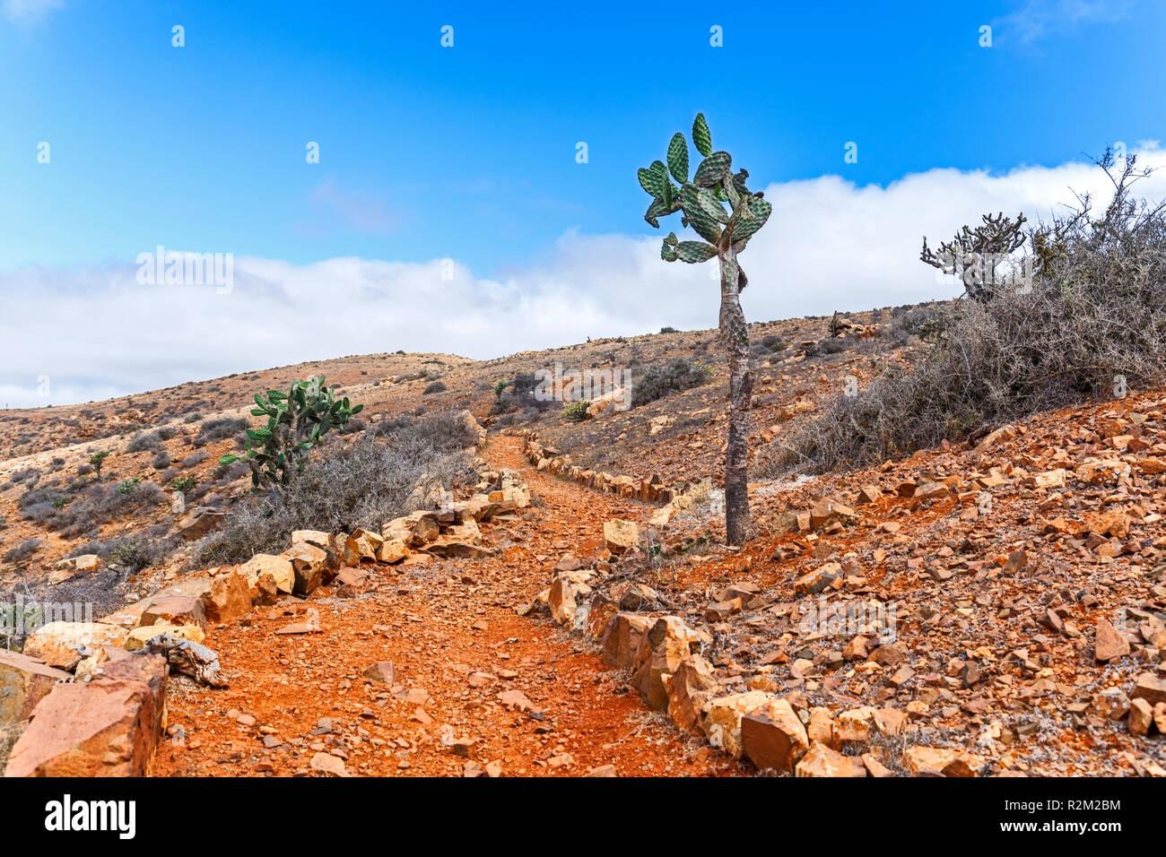 Kaktus in Wilden vulkanischen Landschaft, Fuerteventura, Kanarische Inseln Stockfoto