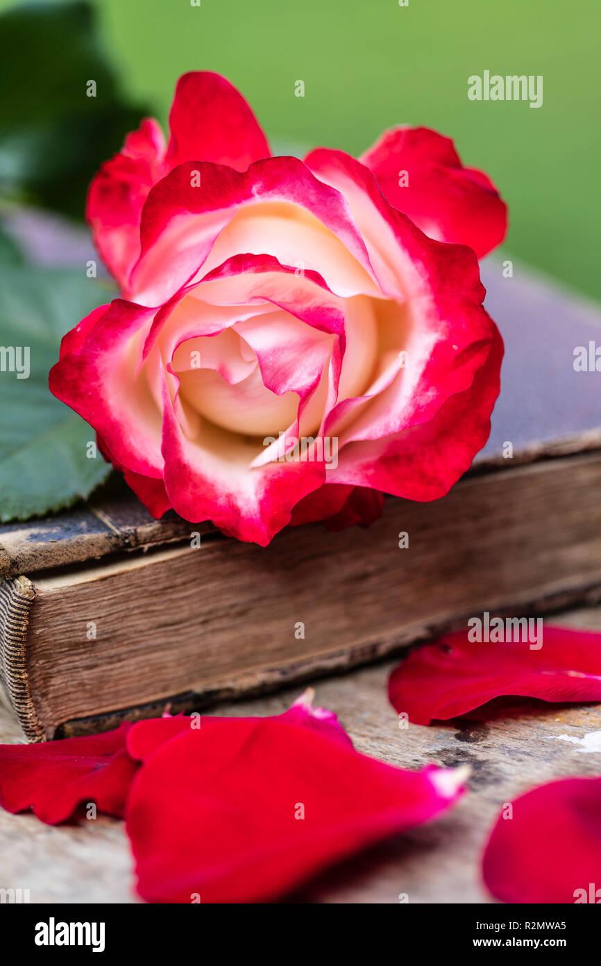 Altes Buch mit einer Rose, nostalgische Stockbild