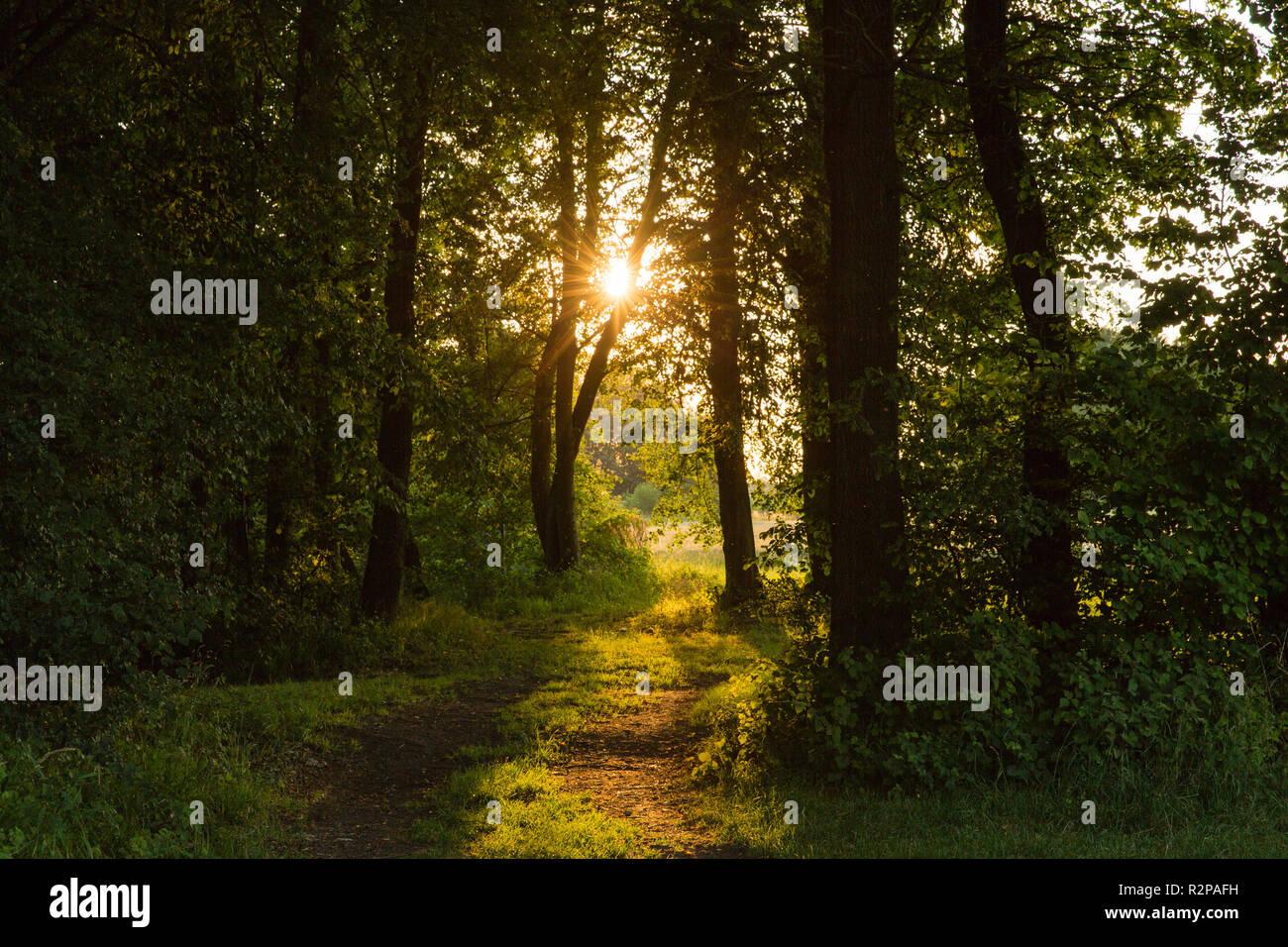 Waldweg, niedrige Sonne, contre-jour Stockbild