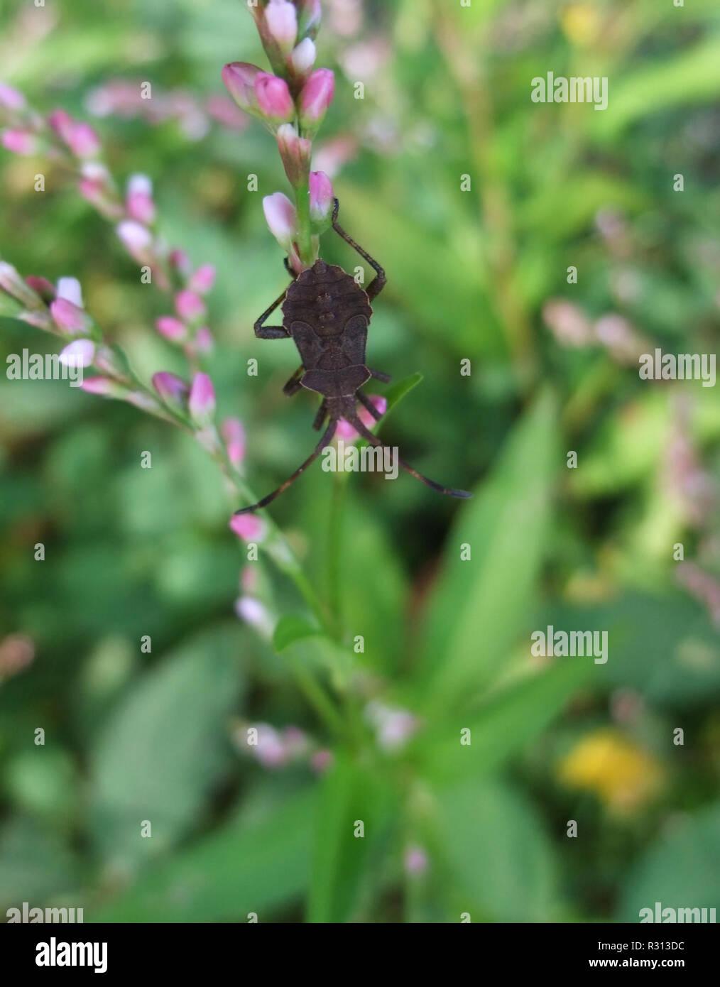Braun bug in natürlichen zurück Stockbild