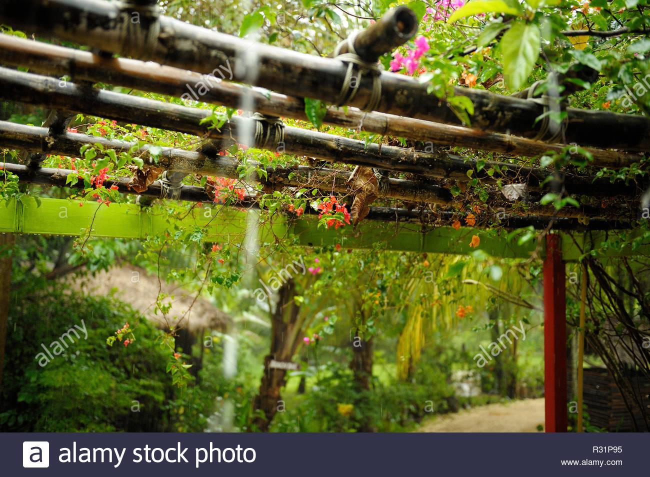 Bunte Pflanzen Wachsen Auf Bambus Pergola Unter Tropischen Regen In