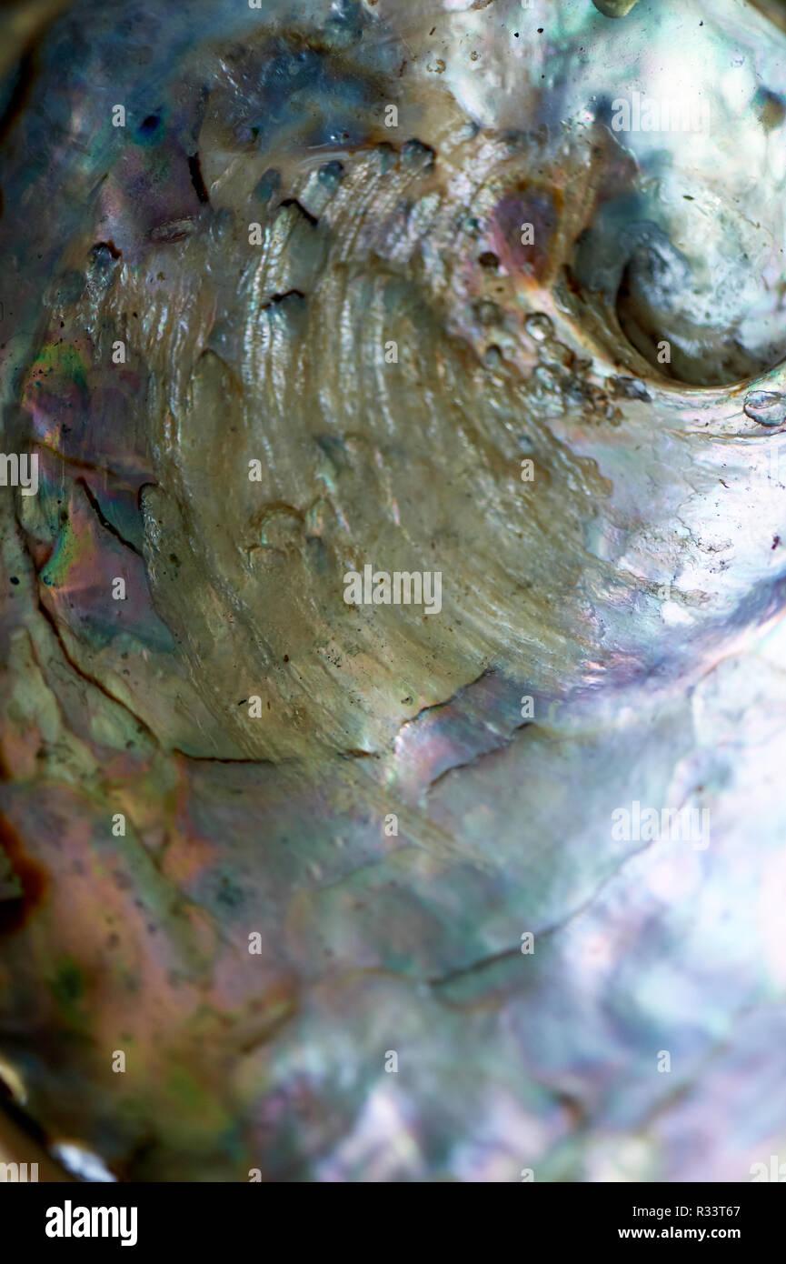 Textur. Große Perlmutt Muschel. Makro. Welt der Meerestiere Stockbild