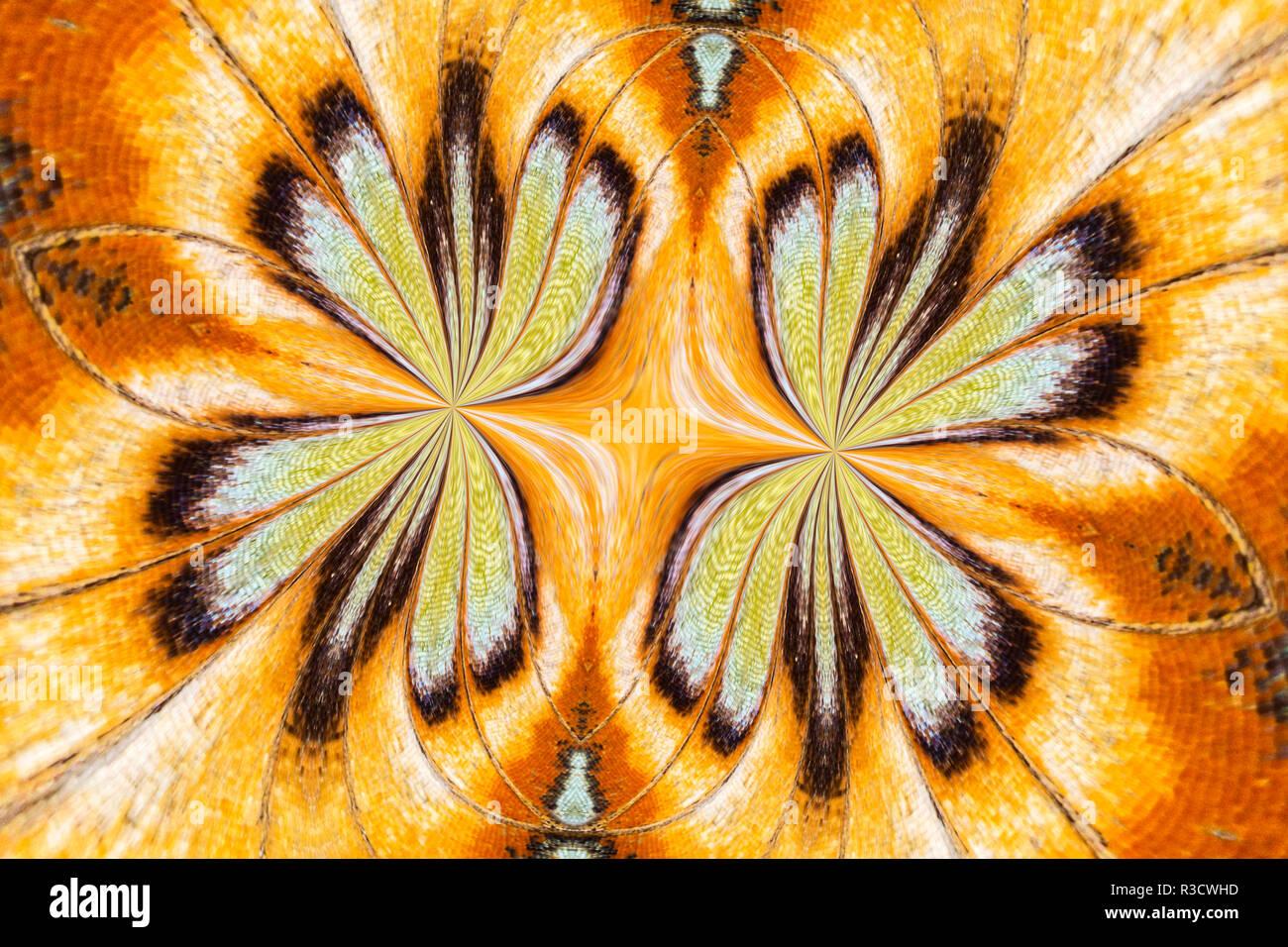 Malachit Schmetterling umgedreht und gespiegelten Muster, Missouri Botanical Gardens, Missouri Stockbild